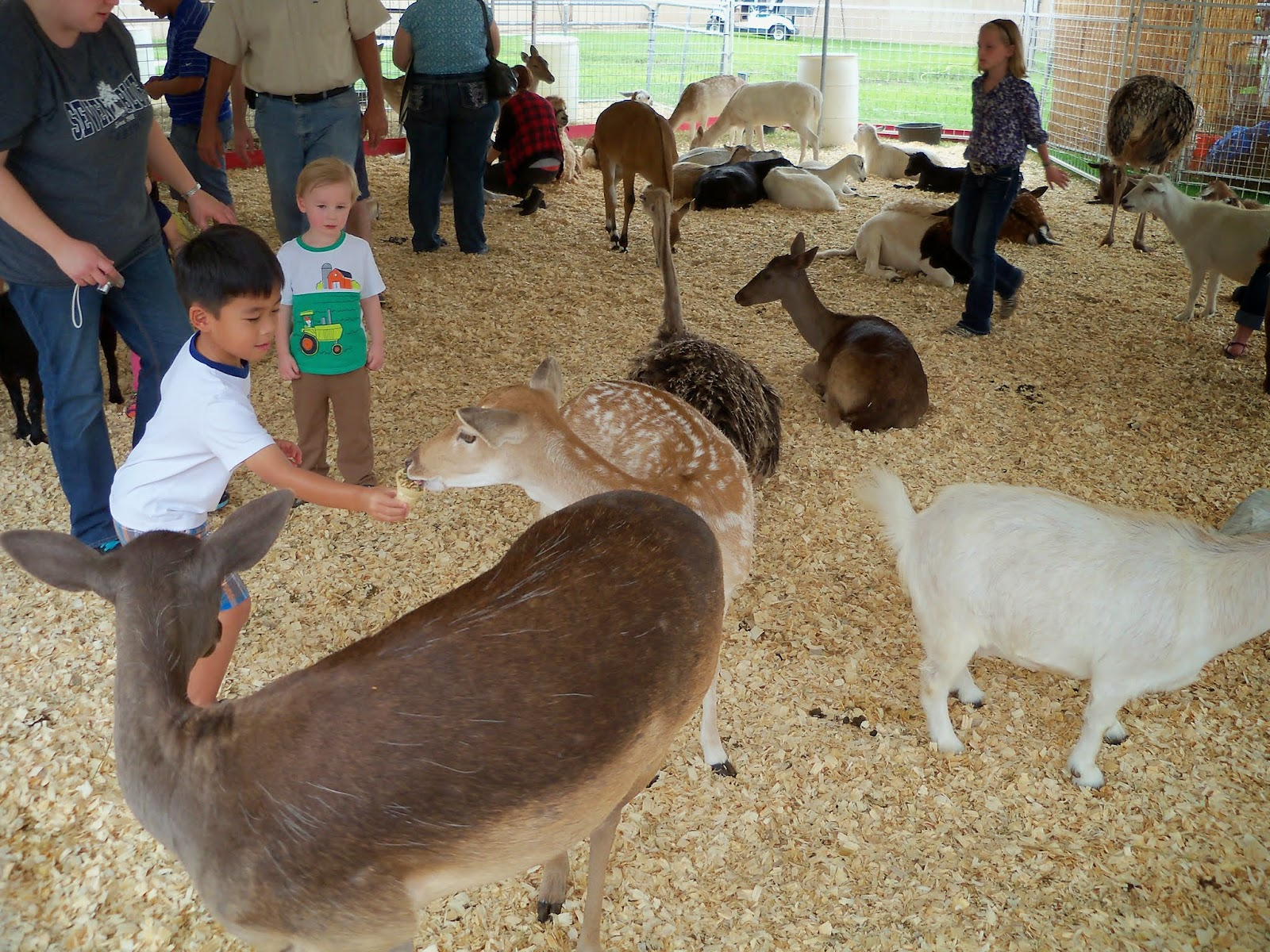 Fort Bend County Fair 2014 - 116_4326.JPG