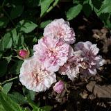 Gardening 2010 - 101_1506.JPG