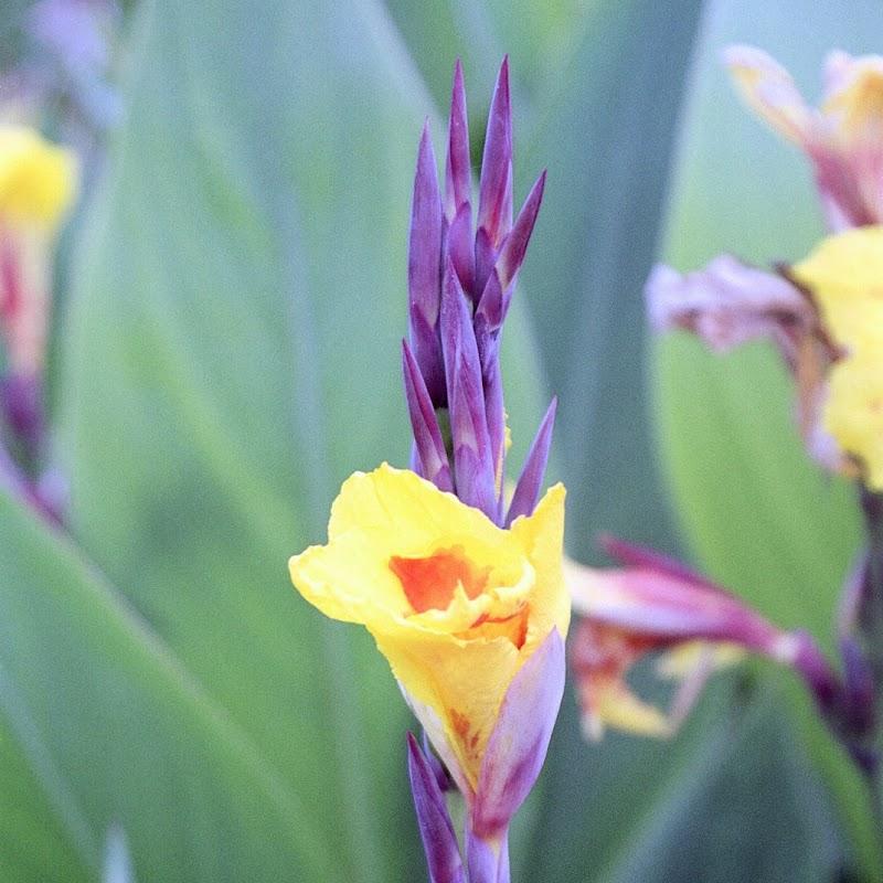Madeira_25 Funchal Flower.jpg
