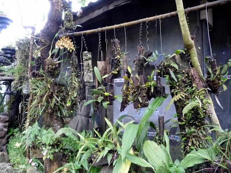 des orchidées à ne plus savoir qu'en faire