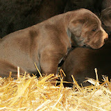 Star & True Blues February 21, 2008 Litter - HPIM0986.JPG
