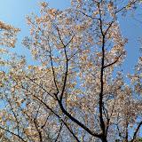 2014 Japan - Dag 7 - tom-SAM_0454-0024.JPG