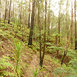 Forest and track near Muirs Lookout (320087)