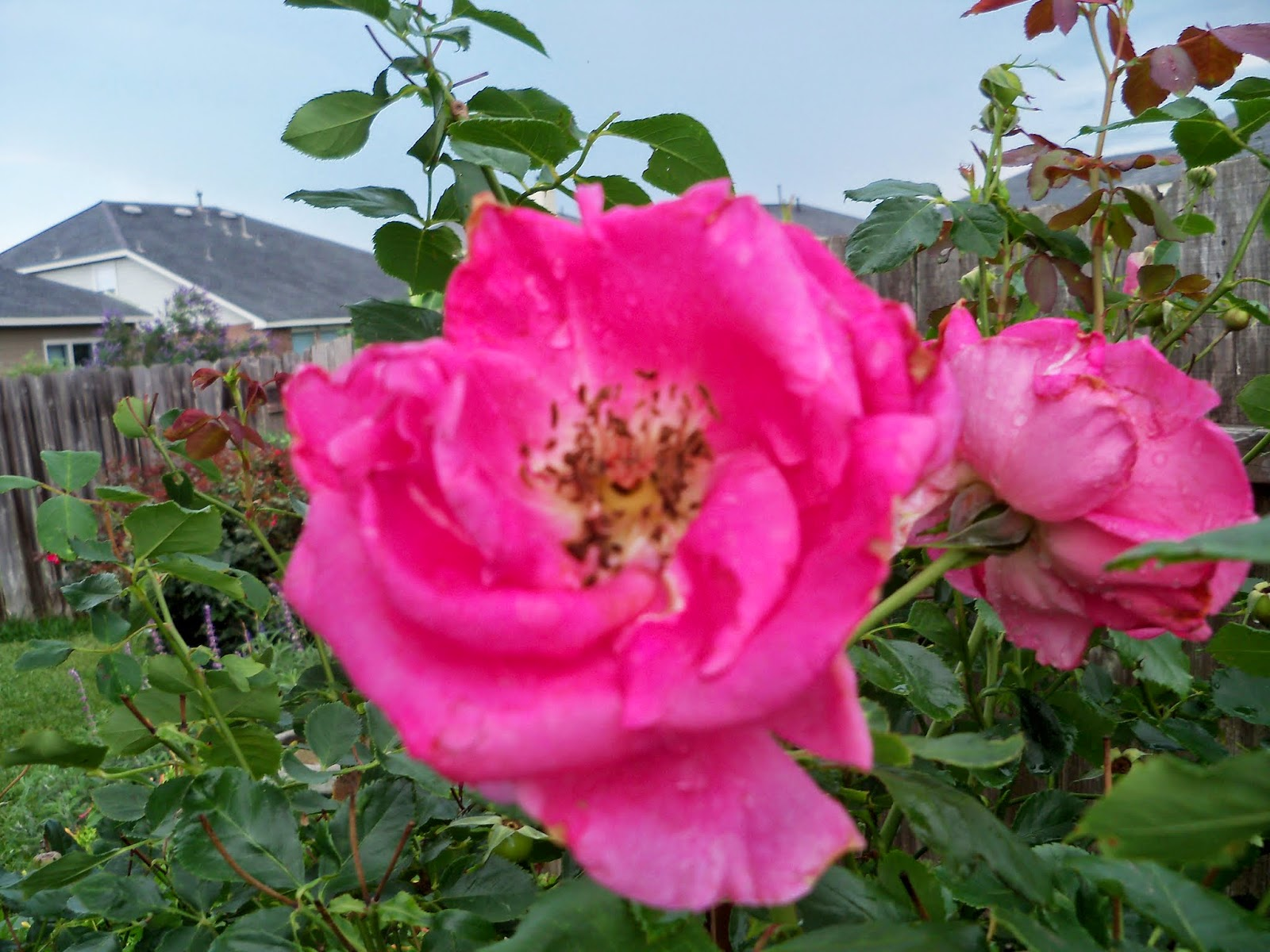 Gardening 2014 - 116_2613.JPG