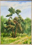 sosny - portret drzew, olej, płótno, 50x70cm