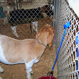 Fort Bend County Fair 2014 - 116_4196.JPG