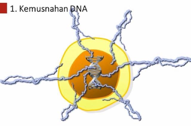 BerJuta Sel DNA Musnah Setiap Hari