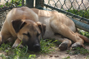 Anzol - Rehomed Germany