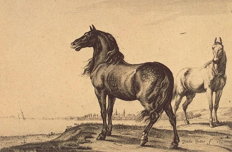 Paulus Potter - Two Horses