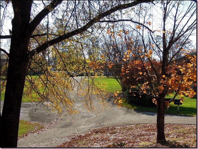 leavesDSCN1495