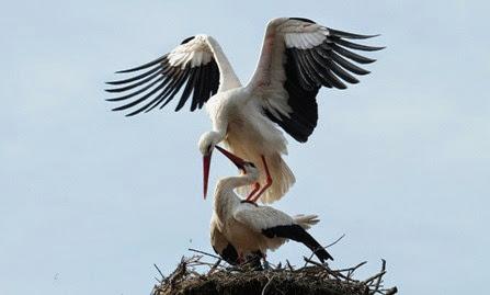 Visite ai nidi con i