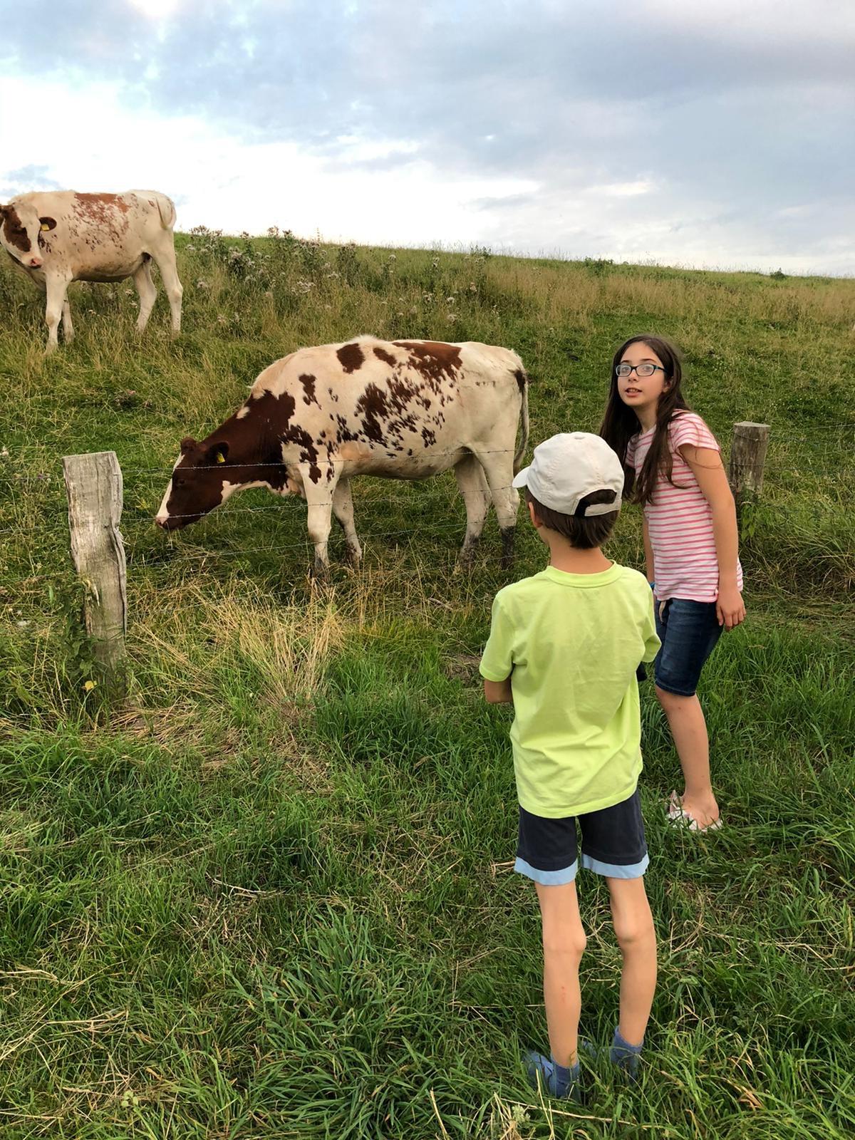Meine Kinder und eine Kuhherde am Rastplatz an der Eider, Deutschland