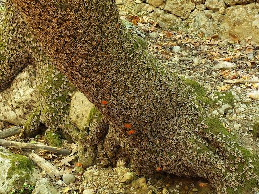 Petaloudes-valle-farfalle-7