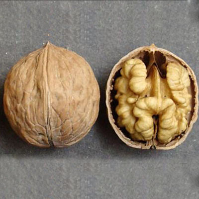 Песчанский грецкий орех