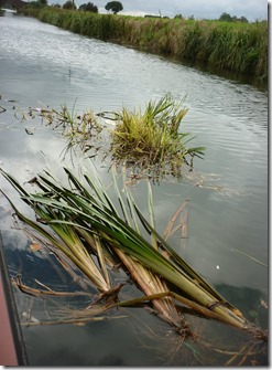 6 lots of floating vegetation