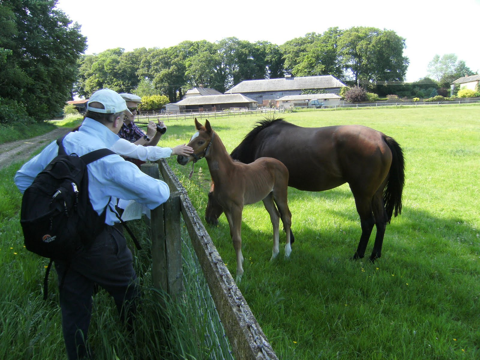 DSCF0873(1) Friendly horses, Springbottom Farm