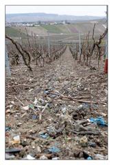 vinice-odpad