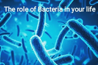 What is the role of Bacteria in your life?