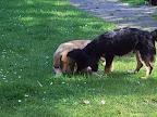 Marlon und Finja inspizieren eien toten Regenwurm