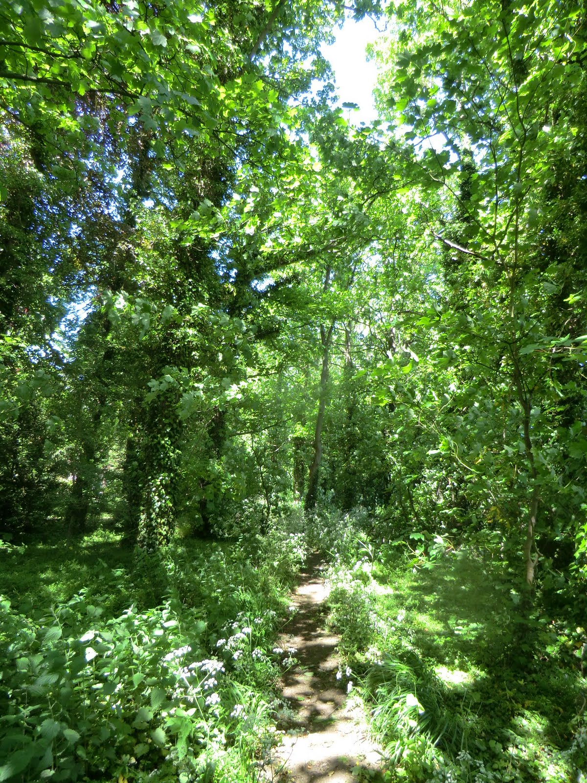 CIMG8350 Shady woodland path, Hollingbourne
