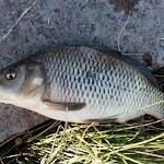 20150617_Fishing_Oleksandriya_014.jpg