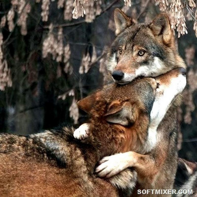 Такая зверская любовь