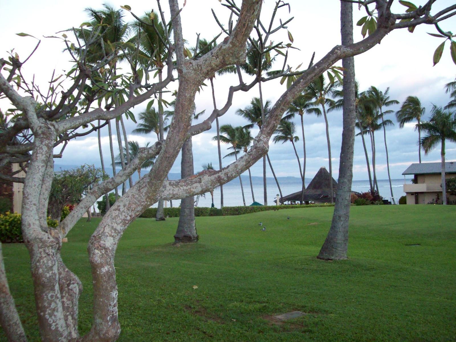Hawaii Day 6 - 114_1671.JPG