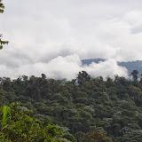 La forêt des nuages à Los Cedros, 1400 m. Montagnes de Toisan, Cordillère de La Plata (Imbabura, Équateur), 20 novembre 2013. Photo : J.-M. Gayman
