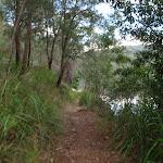 Meandering along the bank of Cowan Creek (118348)