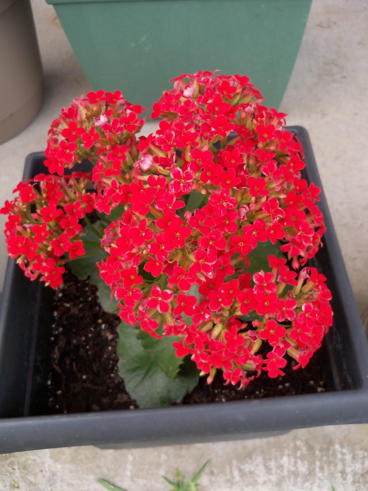 Gardening 2010 - 101_0366.JPG