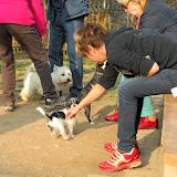 Kleinhundegruppe Mittwoch 17.30 Uhr - DSC_0036.JPG