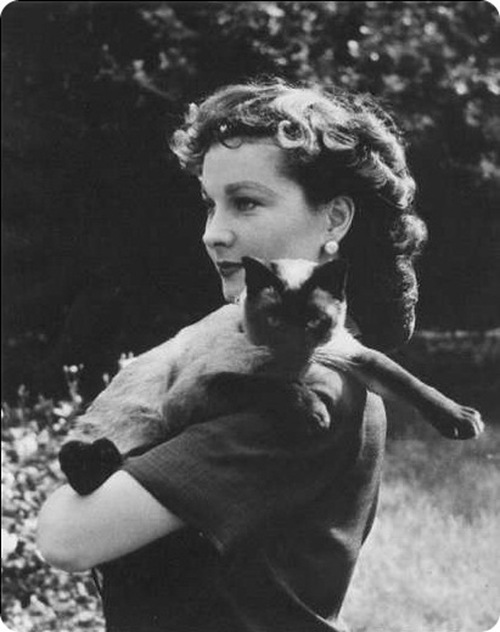 Vivian Leigh and a cat