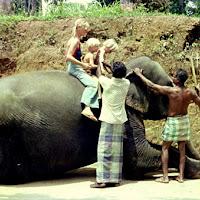 78 Sri Lanka elephant sit.jpg