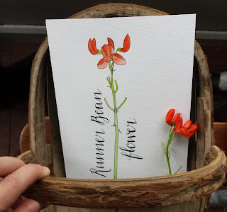 www.AliceDrawsTheLine.co.uk :: Runner Bean Flowers