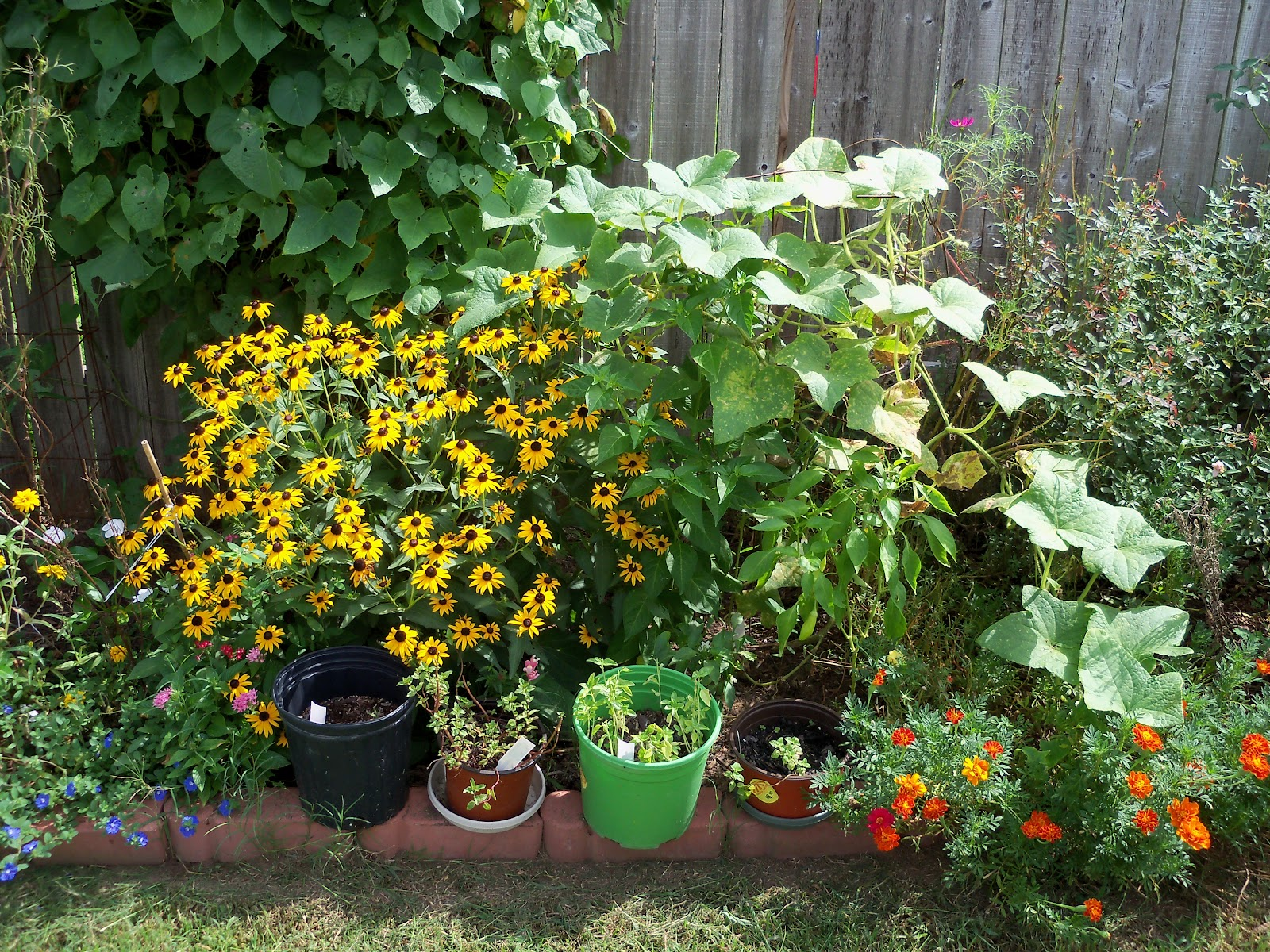 Gardening 2010, Part Three - 101_5196.JPG
