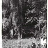 n010-027-1966-tabor-sikfokut.jpg