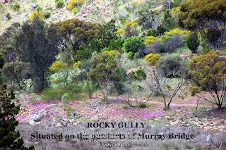 04 Rocky Gully (13)