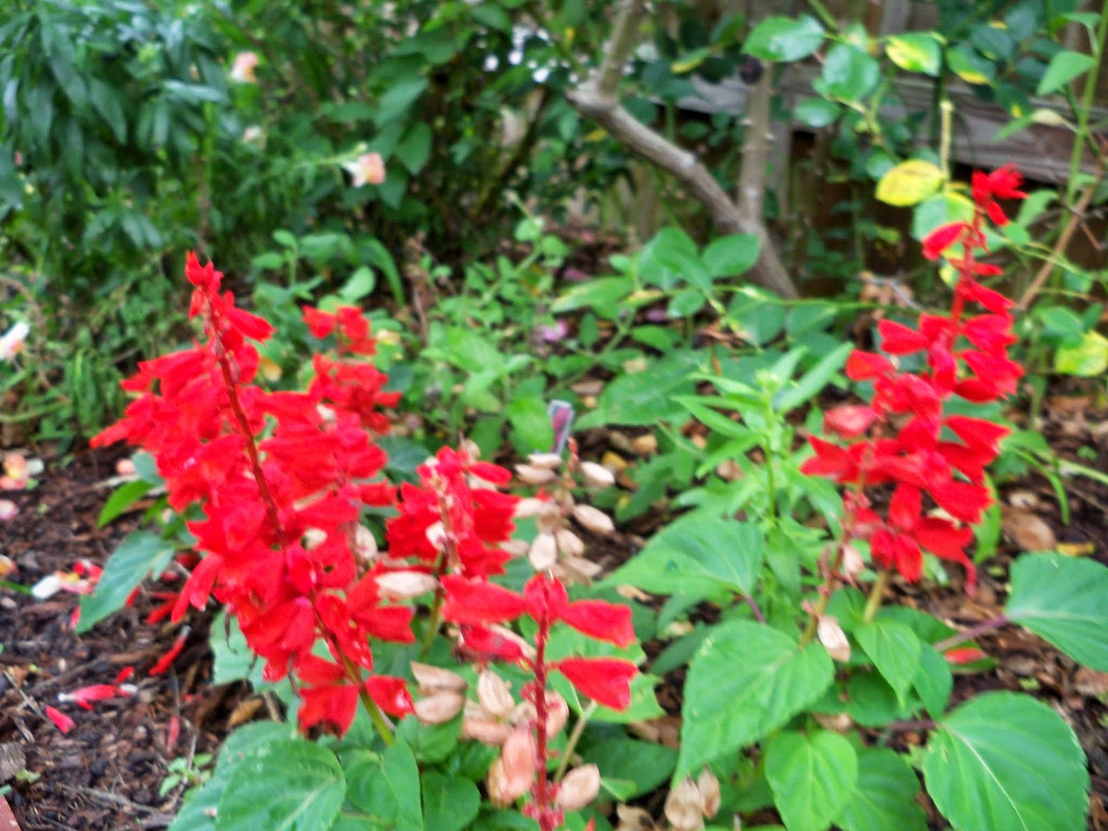 Gardening 2014 - 116_2609.JPG