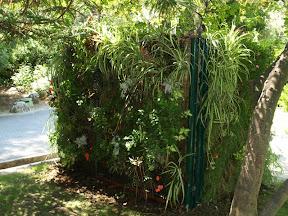Cache container pour les poubelles de la ville de Nice,ses panneaux végétaux sont visible au parc PHOENIX situé prés de l'aeroport