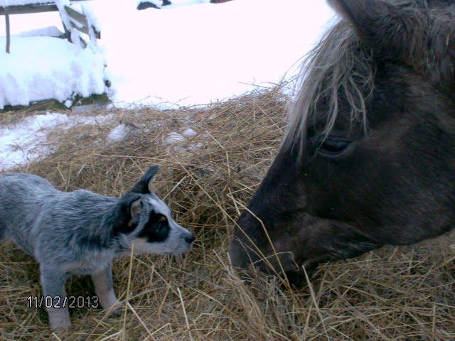 win ja hobune