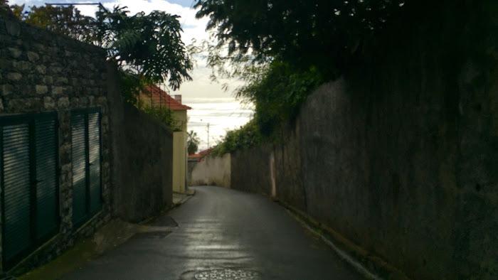 Toboggans of Funchal