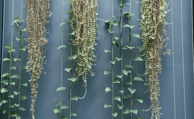 Plants grow vertically
