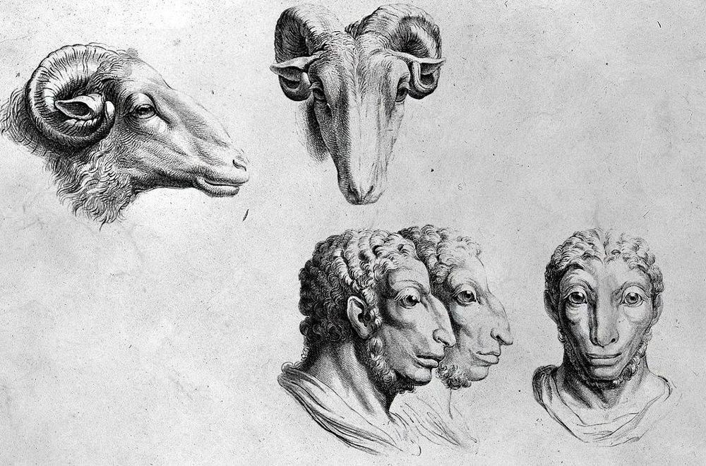 charles-le-brun-physiognomic-heads-12