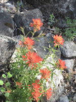 Still, lots of reasons to stop and small the Indian Paintbrush ©http://ba​ckpackthes​ierra.com