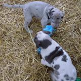Thelma & Garths 3/21/12 litter - SAM_3221.JPG