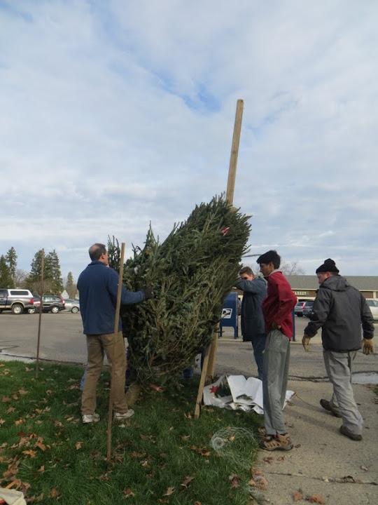 Christmas Tree Lot - IMG_1820.JPG