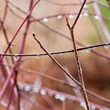 dewdrops_MG_2821.jpg