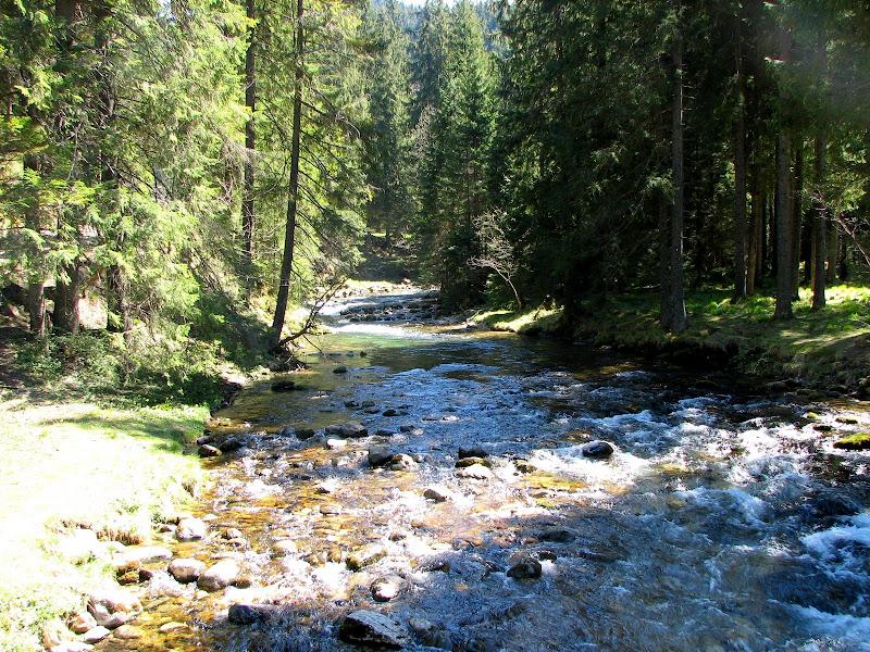 Potok w Dolinie Kościeliskiej