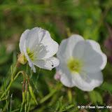2013 Spring Flora & Fauna - IMGP6317.JPG
