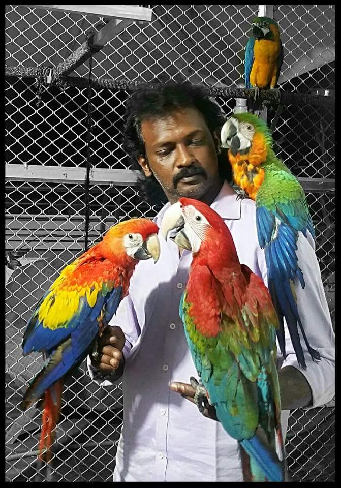 Preethi Farms Exotic Birds Breeders March 2016